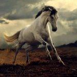 معلومات عن الحصان البري