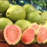 الجوافة علاج سكر الدم