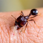 تفسير رؤية النمل للعزباء في الحلم